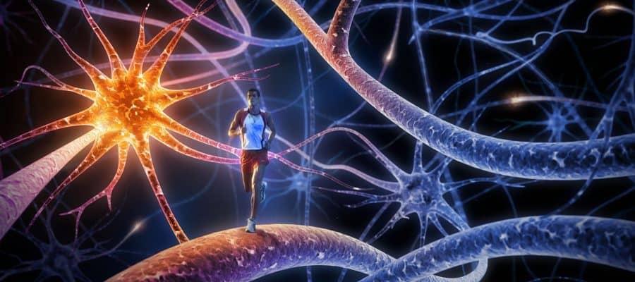 Σεροτονίνη – Η πολύτιμη ορμόνη της Ευτυχίας! Πως θα την αυξήσετε!